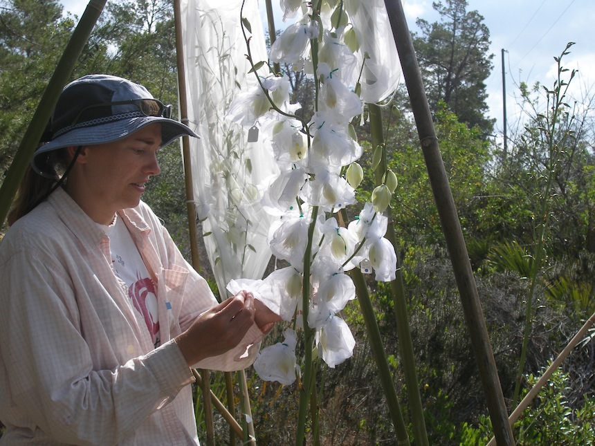Kari installing flower cages with beetles
